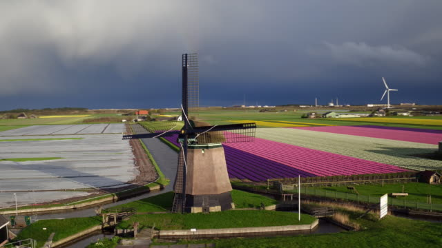 aerial view of wind power and tulips field in Holland