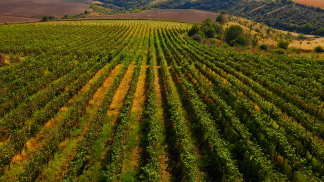 Aerial view of winery landscape video