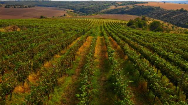 aerial view of winery landscape - azienda vinicola video stock e b–roll