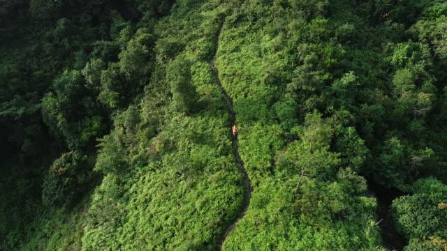 flygfoto av kvinna ultramaraton löpare kör upp på fjäll sluttningen vid tropisk regnskog, 4k - jogging hill bildbanksvideor och videomaterial från bakom kulisserna