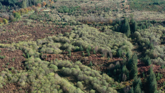 Aerial view of woodland in Dumfries and Galloway