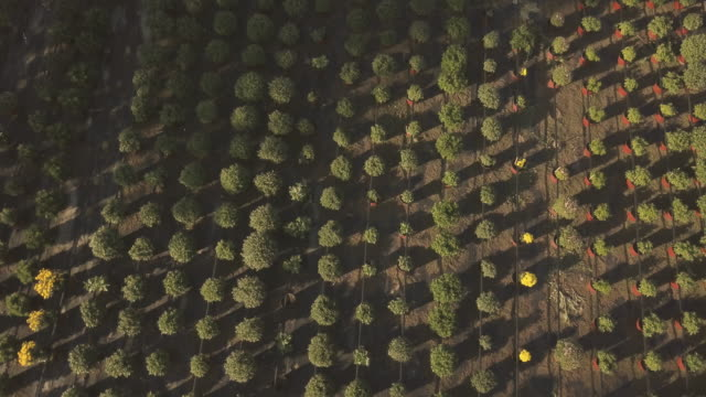 Aerial view on a botany garden Aerial view on a flower farm,with flowers in the pot,and seedlings plant nursery stock videos & royalty-free footage