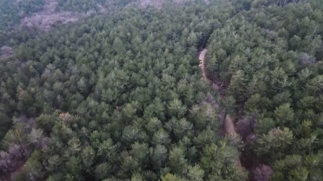vidéos et rushes de vue aérienne sur une voiture explorant la nature sauvage sur le chemin macadam - inclinaison vers le haut