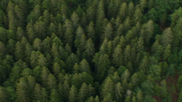 HD: Aerial view on a dense forest video