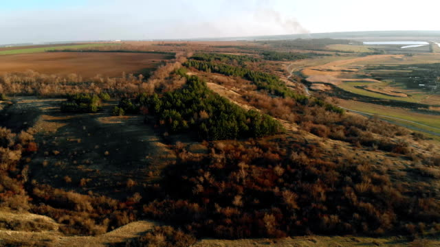 Aerial view on coniferous forest growing in beam on low hills near brown field Aerial view on coniferous forest growing in beam on low hills near brown field. Wild nature in countryside marsh stock videos & royalty-free footage