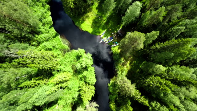 Aerial view on Forest and River video
