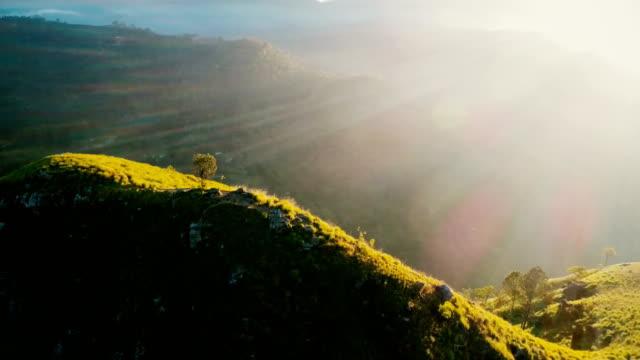 vídeos de stock e filmes b-roll de aerial view on tea plantation in sri lanka - sri lanka