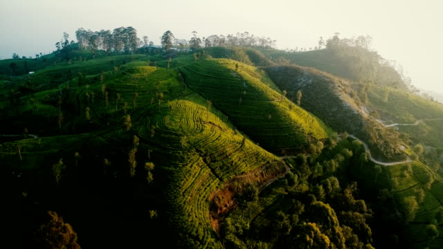 Aerial view on tea plantation in Sri Lanka Aerial view on green tea plantation in mountains in Sri Lanka sri lanka stock videos & royalty-free footage