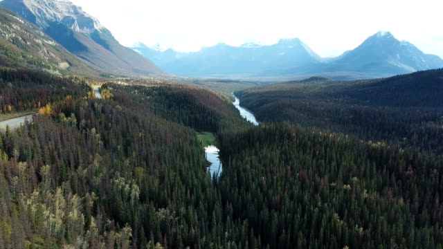 Aerial view on the forest and river. Beautiful natural landscape at the autumn time