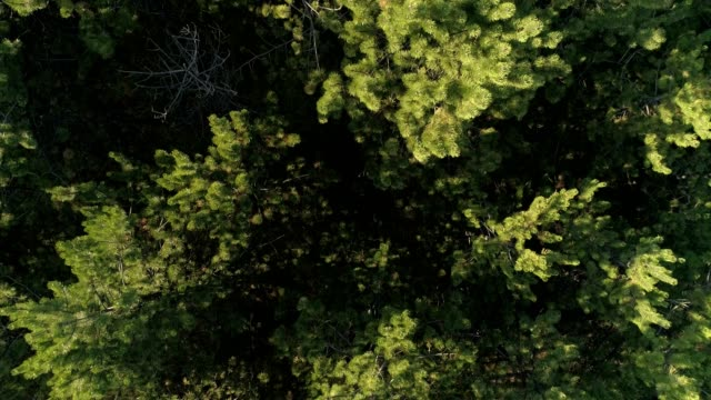 Aerial view on the forest video