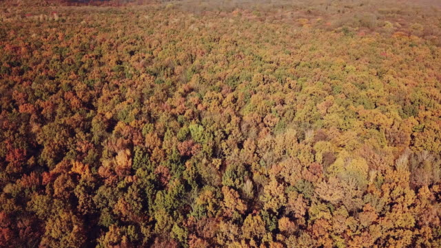 aerial view on the multicolored trees of the yellow shade of the forest. - wood texture filmów i materiałów b-roll