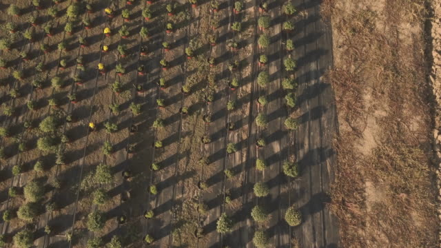 aerial view on the sunny flower garden - semenzaio video stock e b–roll