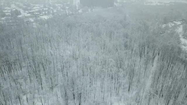 vídeos y material grabado en eventos de stock de vista aérea en el bosque de invierno - diseño natural