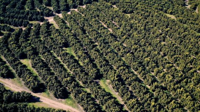 Aerial View Orange Trees Plantation video
