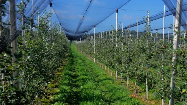luftaufnahme: obstgarten mit netzgewebe - moskitonetz stock-videos und b-roll-filmmaterial