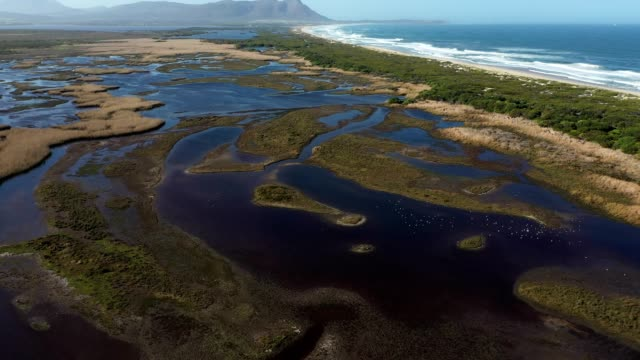 Aerial view over a beautiful estuary near the coast Birdlife flourishes in an estuary near the coast after the COVID-19 lockdown assists with environmental conservation. Clear water full the Kleinmond estuary near the coast western cape province stock videos & royalty-free footage