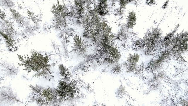 Aerial view over a forest video