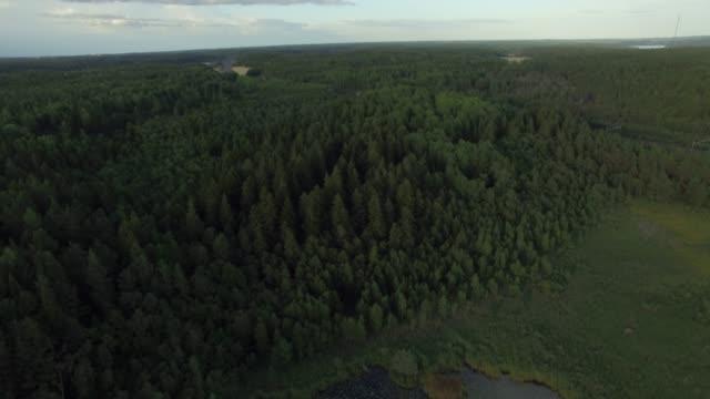 flygfoto över skog och sjö landskap i sverige - pine forest sweden bildbanksvideor och videomaterial från bakom kulisserna