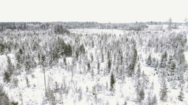 Aerial view over forest video