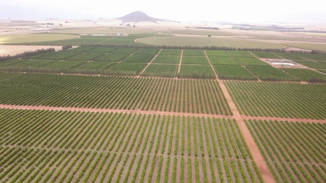 Aerial view over huge citrus farm