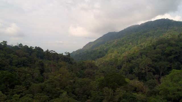 マレーシア最後の熱帯雨林の空中写真 - 雨林点の映像素材/bロール