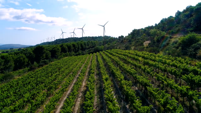 Aerial view over vineyard with wind turbines in background Wind turbines over hill under the sun. Windmill surrounded by vineyard on sunny day. Renewable energy solution. Windy Weather in France. An amazing panorama of wind turbines in fields. environmental conservation stock videos & royalty-free footage