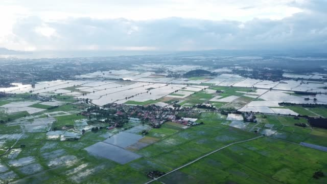Aerial view paddy field at Penang with reflection in water Aerial view paddy field at Penang with reflection in water during evening. agricultural occupation stock videos & royalty-free footage