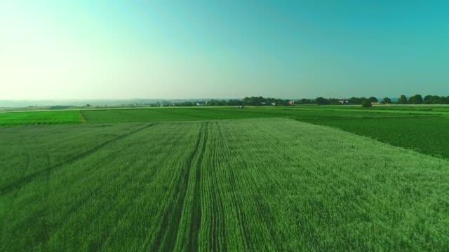 luftansicht schwenken. niedriger blick über eine grüne landschaft mit langem gras. 4k. - niedrig stock-videos und b-roll-filmmaterial
