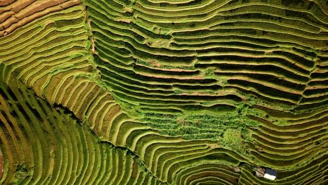havadan görünüm pirinç tarlası dağlarda pirinç yetiştiriciliği ile panoramik yamaç terasları - unesco stok videoları ve detay görüntü çekimi