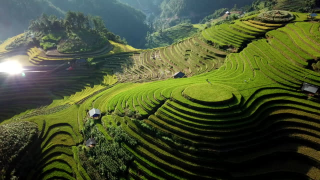 aerial view rice field terraces panoramic hillside with rice farming on mountains - индонезия стоковые видео и кадры b-roll