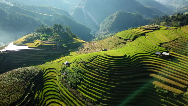 aerial view Rice field Terraces panoramic hillside with rice farming on mountains aerial view Rice field Terraces panoramic hillside with rice farming on mountains sa pa stock videos & royalty-free footage