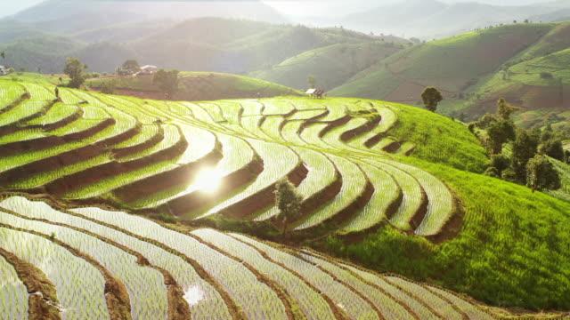 havadan görünüm pirinç alanı ,teraslar - unesco stok videoları ve detay görüntü çekimi
