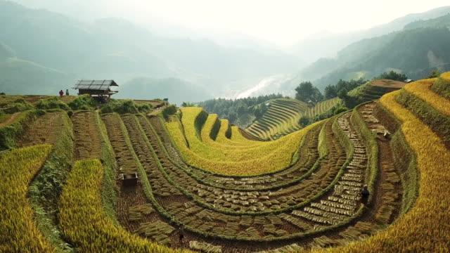 widok z lotu ptaka pola ryżowe na tarasie w yenbai vietnam.beautiful tarasowe pole ryżowe w sezonie zbiorów w zachodzie słońca w mu cang chai - taras ryżowy filmów i materiałów b-roll