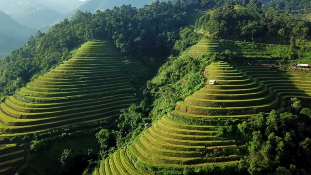 Aerial View Rice terrace fields  in Northwest Vietnam, harvest Season Rice Paddy Fields at Mu Cang Chai, Yen Bai province, Vietnam Aerial View Rice terrace fields  in Northwest Vietnam, harvest Season Rice Paddy Fields at Mu Cang Chai, Yen Bai province, Vietnam sa pa stock videos & royalty-free footage