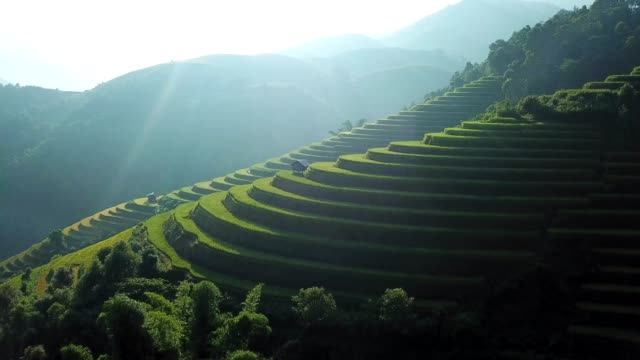aerial view rice terrace fields  in northwest vietnam, harvest season rice paddy fields at mu cang chai, yen bai province, vietnam - индонезия стоковые видео и кадры b-roll