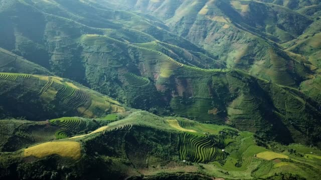 Aerial View Rice terrace fields  in Northwest Vietnam, harvest Season Rice Paddy Fields at Mu Cang Chai, Yen Bai province, Vietnam