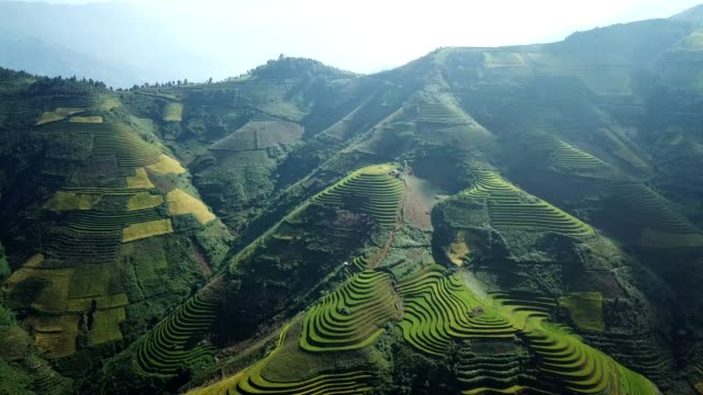 aerial view rice terrace fields  in northwest vietnam, harvest season rice paddy fields at mu cang chai, yen bai province, vietnam - cambogia video stock e b–roll