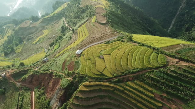 aerial view rice terraces of farm on hilly or mountainous terrain,beautiful landscape view of rice terrace in mu cang chai at vietnam , agriculture harvest paddy fields terraces is farming traditional in southeast asia - taras ryżowy filmów i materiałów b-roll
