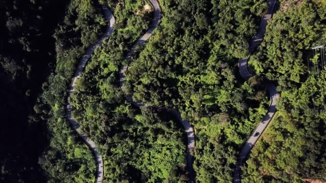 aerial view road in the forest - strada transitabile video stock e b–roll