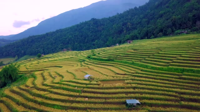 aerial view shot of rice terraces in the north thailand - taras ryżowy filmów i materiałów b-roll