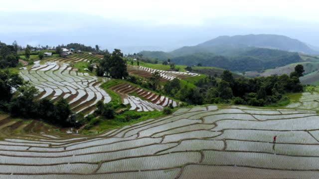 aerial view shot of rice terraces in the northern thailand in rainy day - taras ryżowy filmów i materiałów b-roll