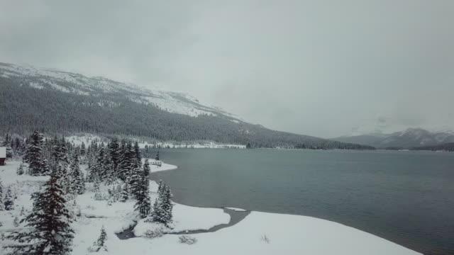 aerial view  snow pine tree - дикая местность стоковые видео и кадры b-roll