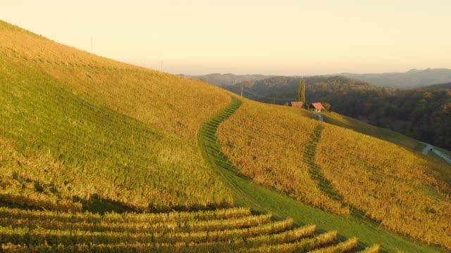 ws-antenn visa soliga, lugna, idylliska hösten vingård sluttning, spicnik, slovenien - steiermark bildbanksvideor och videomaterial från bakom kulisserna