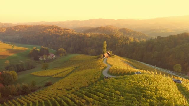 ws aerial view sunny,tranquil,idyllic rural vineyards,spicnik,slovenia - azienda vinivola video stock e b–roll