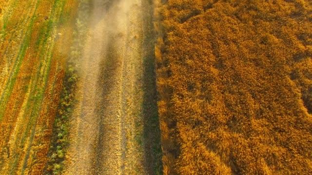 vídeos de stock e filmes b-roll de aerial view to combine harvester working on rapeseed field. - crucíferas