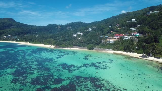 4K Aerial View to the Green Trees and Clear Blue Water of the Mahe Island 4K Aerial View to the Green Trees and Clear Blue Water of the Mahe Island in the Heart of Indian Ocean, Seychelles flowering plant stock videos & royalty-free footage