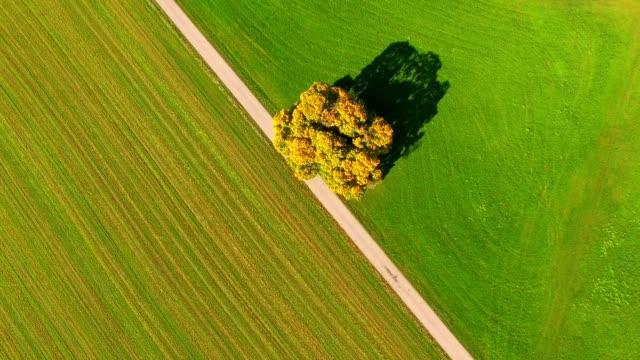 aerial view: tree on meadow in autumn - obszar zadrzewiony filmów i materiałów b-roll
