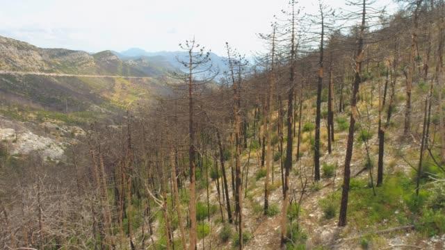 stockvideo's en b-roll-footage met ws antenne weergave bomen op heuvel na bosbrand, pelijesac, kroatië - bosbrand