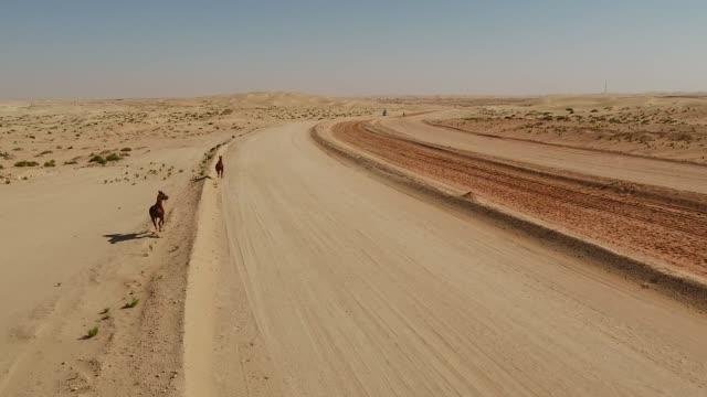 abu dabi al khatim çöl running free havadan görünümü iki at. - abu dhabi stok videoları ve detay görüntü çekimi