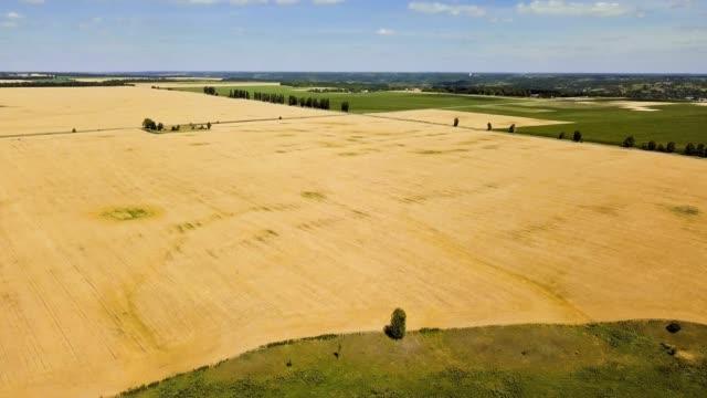 上からの眺め: 小麦とライ麦が風に揺れます。小麦とライ麦のフィールドの上飛んでいます。 - 熟していない点の映像素材/bロール